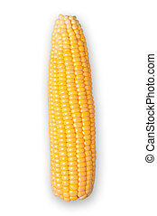 Corn isolated with clipping path.
