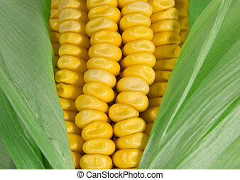 CORN - Keeping Cholesterol Down