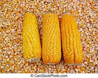 Corn kernels .2.