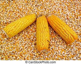 Corn kernels .3.