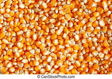 Detail of corn kernels