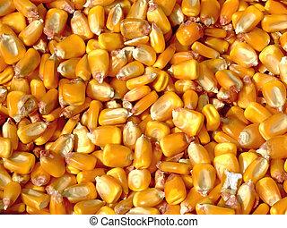 Corn kernels - Pile of corn kernels from a corn sheller