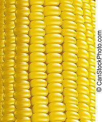 corn., maduro, fragment., macro., ilustração, vetorial