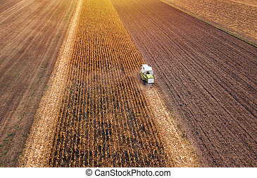 Corn maize harvest, aerial view of combine harvester