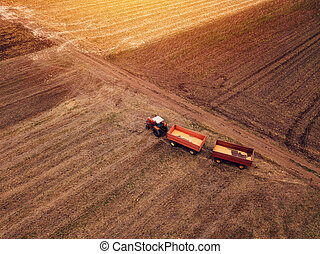 Corn maize harvest, aerial view of tractor