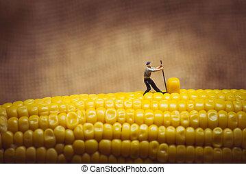 Corn maize harvest. Macro photo.