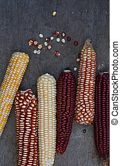Corn of different colors