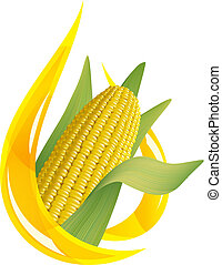 Corn oil. Stylized drop of oil, and corn cob. Vector...