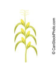 Corn on stalk vector icon