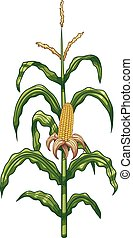 Cartoon corn plant. Vector clip art illustration with simple gradients. Elements are on separate layers for easy editing.