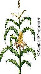 Corn plant - Cartoon corn plant. Vector clip art...