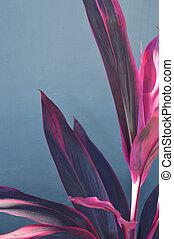 Corn Plant's bright leaf with red stripe (Dracaena fragrans)