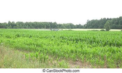 Corn plants field and tractor spray chemicals for crop protect. 4K