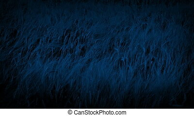 Corn Plants Swaying In The Breeze At Night