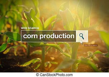 Corn production in internet browser search box, maize field in background