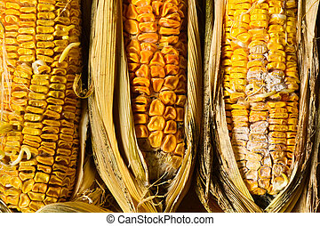 Corn rot, Inedible
