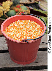 Corn seed in the plastic drum