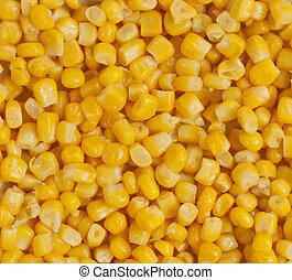 corn seeds close-up
