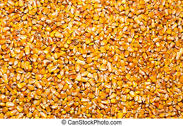 Corn seeds pile - Top view of corn seeds pile as background