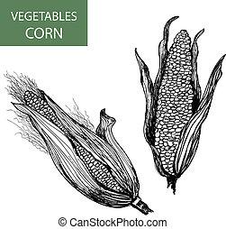 Corn-set of vector illustration