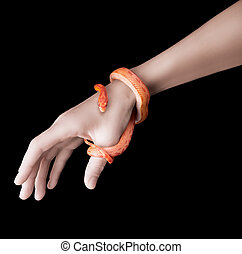 Corn snake and woman hand