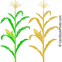 corn stalk vector illustration