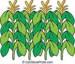 Vector illustration of corn stalks.