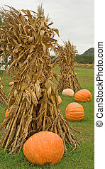 Fall corn stalk bundles and large, orange pumpkins