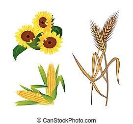 Corn, Sunflowers and Wheat