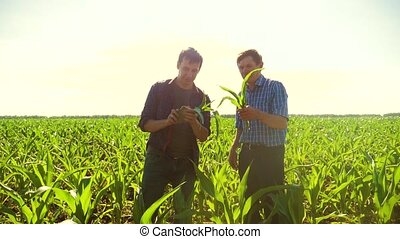 Corn two farmers study on smartphone walking through his...