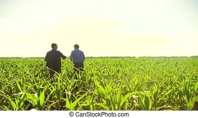 Corn two farmers walking through his field towards camera....