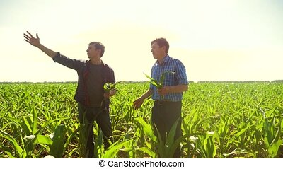 Corn two farmers walking through his field towards camera....