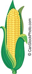 Corn. VECTOR illustration isolated on white.