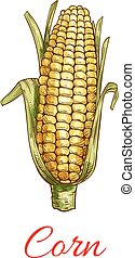 Corn vegetable vector isolated sketch icon - Corn vegetable...