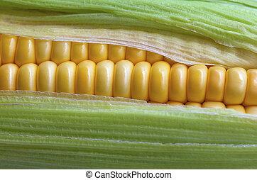 Corn with green leaf.