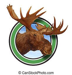cornamenta, alce, símbolo, cabeza, bosque, icono
