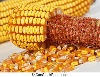 corncob background
