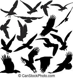 corneille, faucon, corbeau, mouettes, aigle