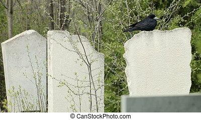 corneille, noir, pierre tombale