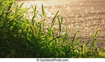 Corner grass moving on wind and ground lit by sun