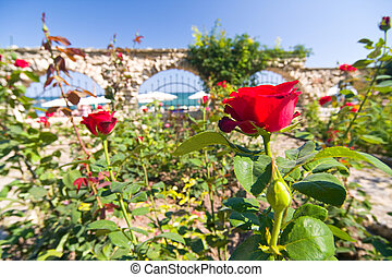 Corner of botanic garden with red roses and sea