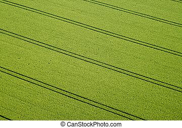 Cornfield, Aerial Photo - Aerial Photo of a cornfield