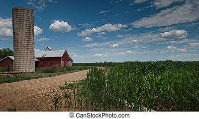 Cornfield and Barn - View of a red barnfrom a cornfield. ...