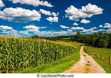 cornfield, e, entrada carro, para, um, fazenda, em, rural,...