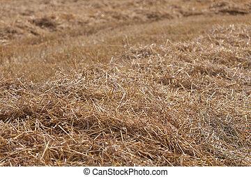 Cornfield straw