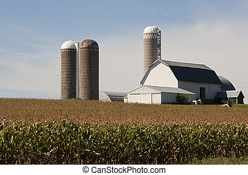 cornfield with a barn and silos - cornfield and a barn with...