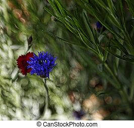 Cornflower and Dianthus