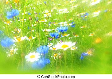 Cornflower, daisies, meadow