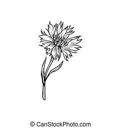 Cornflower monochrome freehand sketch - Cornflower black ink...