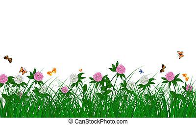 cornflowers, 牧草地, 夏